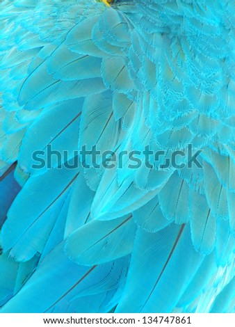 Parrot feathers, Blue macaw parrot feathers,  exotic texture - stock photo