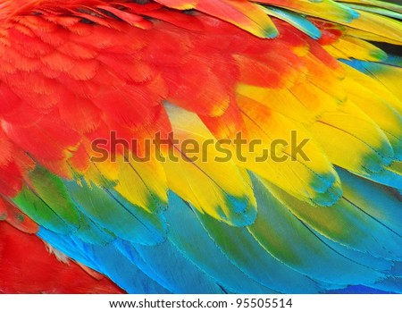 Parrot feathers, red and blue exotic texture - stock photo
