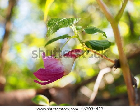 Parrot flower - stock photo