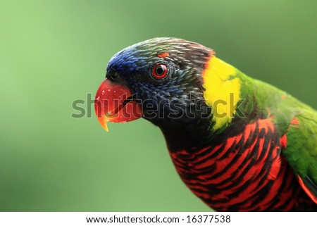 Parrot in birds park. Singapore - stock photo