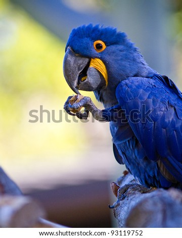 Parrot in captivity at a zoo - stock photo