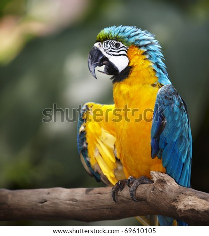 Parrot in green rain forest. Outdoor. - stock photo