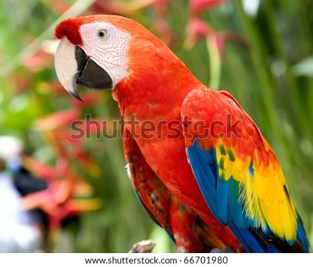 Parrot in jungle. Island Bali - stock photo
