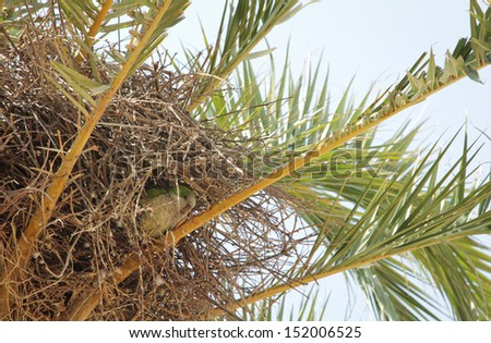 Parrot in the nest