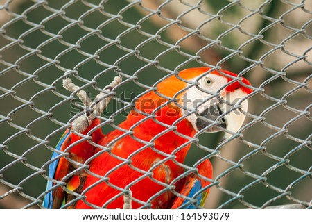 Parrot in the zoo, Thailand - stock photo