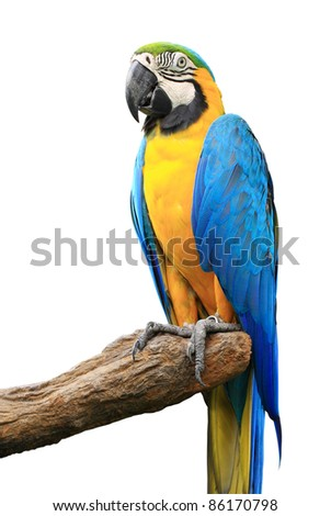 Parrot isolated - stock photo