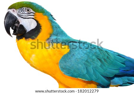Parrot isolated on a white background. Colorful birds.  Isolated animal