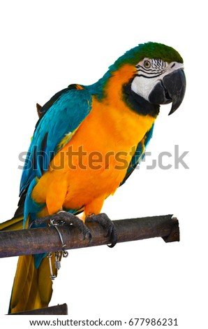 Parrot isolated on white