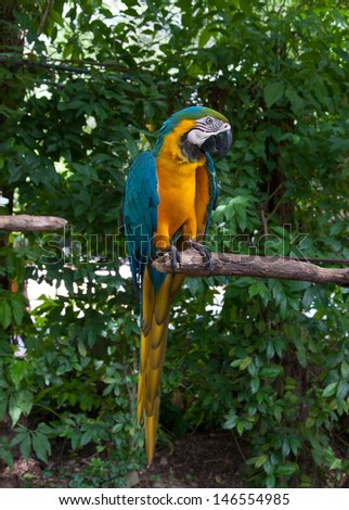 Parrot macaw beautiful colors - stock photo