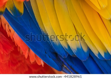 Parrot. Multi-colored feathers. Macaw. Macro photo.  - stock photo