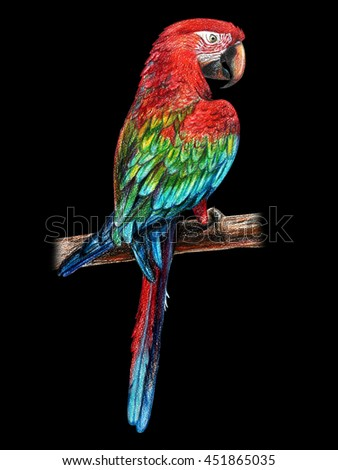 Parrot red. Black background.  Ara chloropterus. Red-and-green macaw. Colored pencil drawing Ara red. Classic drawing Ara red. Detailed drawing Ara red. - stock photo