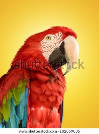 Parrot Red Blue Macaw on Yellow Background - stock photo