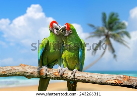 Parrot (Severe Macaw) on the white sand beach white blue sky - stock photo