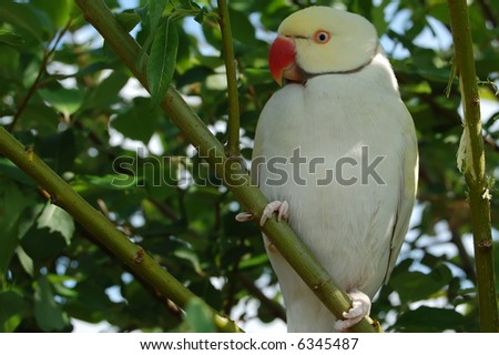 parrot sitting in a tree - stock photo