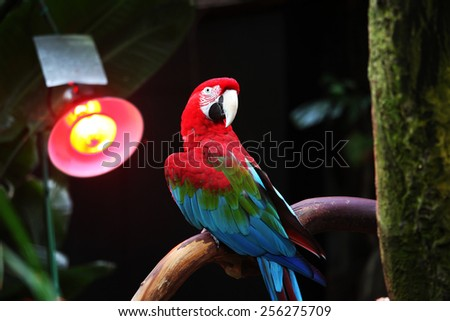 Parrot sitting in front of heater - stock photo