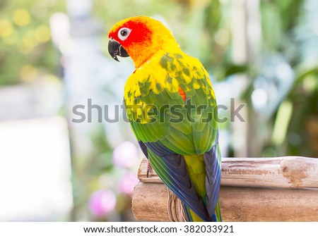 Parrot, sun conure, perching on blurred garden background