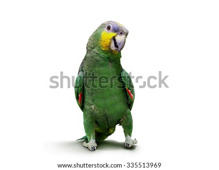 Parrot walking and dancing over white - stock photo