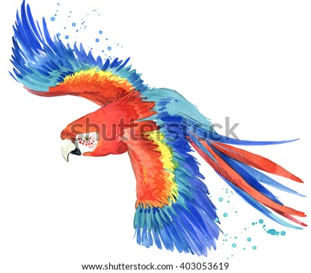 Parrot. Watercolor Parrot illustration. Tropical bird watercolor.