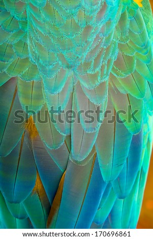 Parrot wings close-up - stock photo