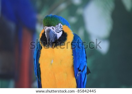 Parrot, with Amazing Colors, poses and views