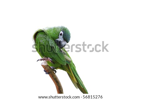 Parrot with green and yellow feathers - stock photo