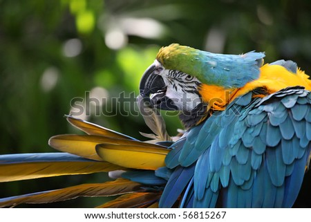 Parrot with yellow and blue feathers - stock photo