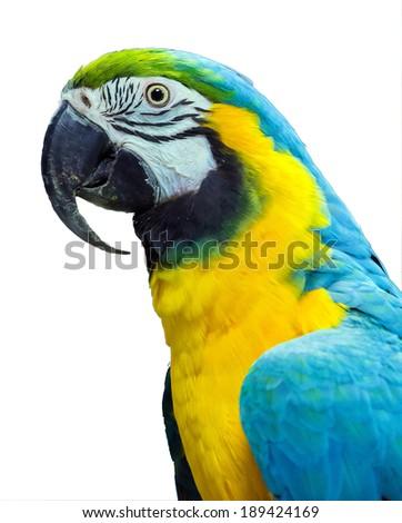 parrot yellow on white background - stock photo