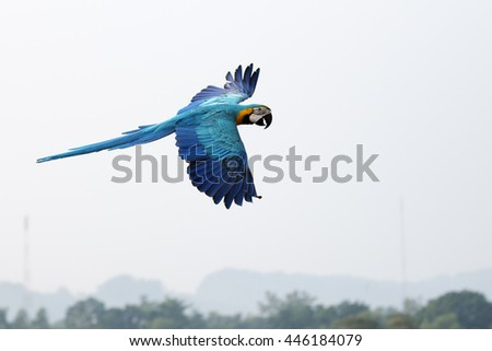 Parrots flying in the sky. in the morning. - stock photo