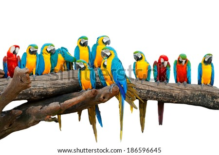 Parrots in the Park, Thailand. - stock photo