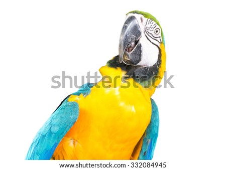 parrots  Isolated on White background ,Parrots Court ,Colorful parrot ,beautiful parrots,parrots looking,parrots sitting,animals,big parrots,parrots  - stock photo