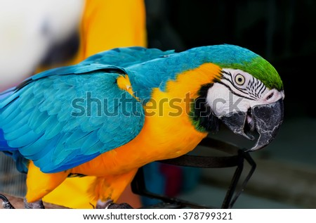 parrots looking some thing  - stock photo