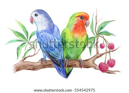 Love Birds Drawing Www Pixshark Com Images Galleries