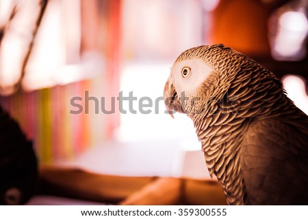 parrots ,Parrots Court ,Colorful parrot ,beautiful parrots,parrots looking,parrots sitting,animals,big parrots,white parrots - Warm tone. - stock photo