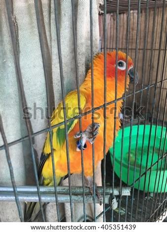 Parrots raised in captivity. - stock photo
