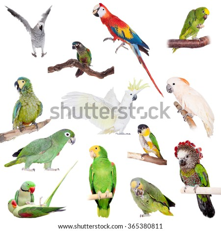 Parrots set isolated on white background - stock photo