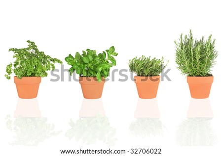 Parsley, basil, thyme and rosemary herbs growing in terracotta pots, isolated over white background.