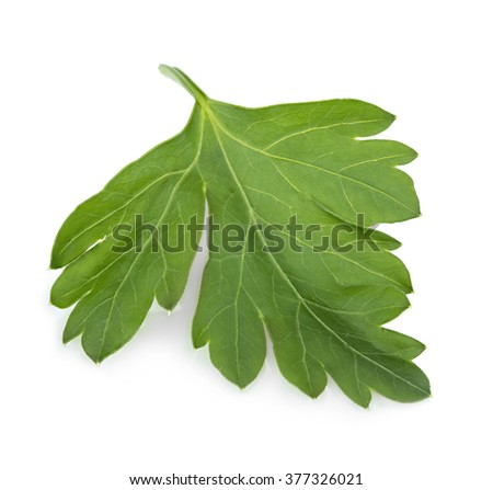 Parsley close-up isolated on a white background. - stock photo