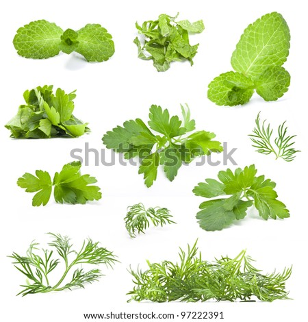 Parsley, dill and mint leaves isolated on white background - closeup. - stock photo