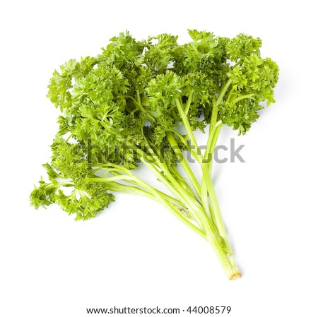 Parsley green leaf closeup on white background - stock photo