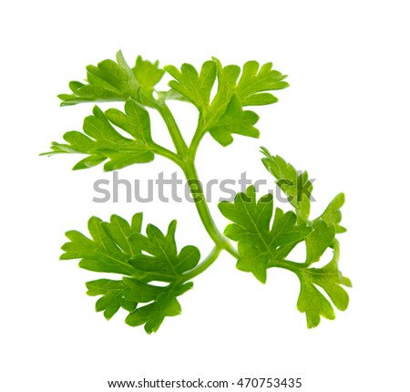 Parsley green leaves isolated on white background