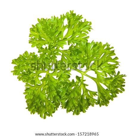 Parsley herb isolated on white background. - stock photo