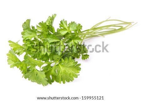 Parsley herb isolated on white background - stock photo