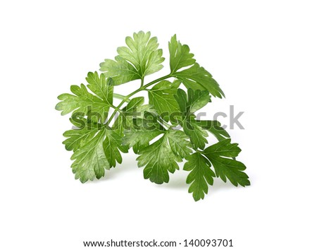 Parsley in closeup on a white background - stock photo