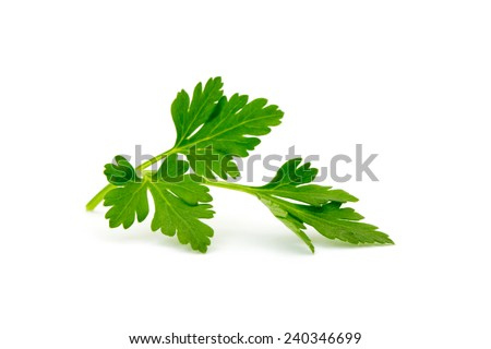parsley isolated on white - stock photo