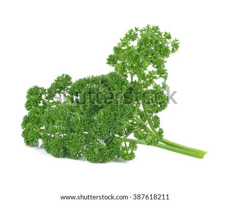 parsley isolated on white background - stock photo