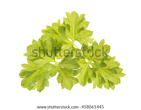 Parsley leaf isolated on white