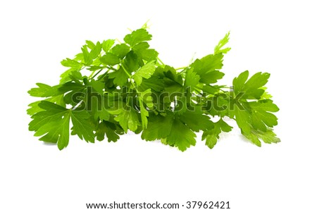 Parsley leaves isolated on a white background - stock photo