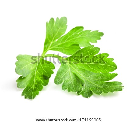 Parsley leaves isolated on white background, closeup - stock photo