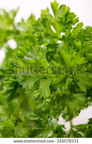 Parsley on table close-up