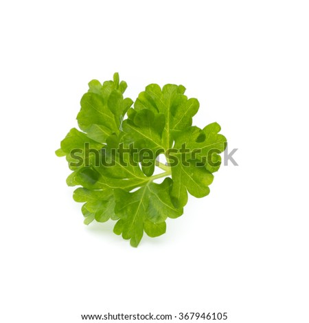 Parsley on the white background.